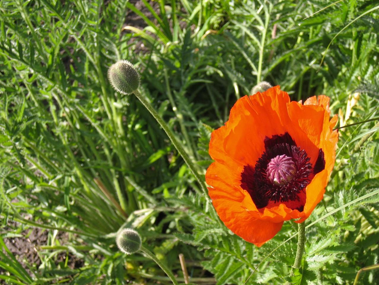 Jak zwalczyć chwasty w ogrodzie?