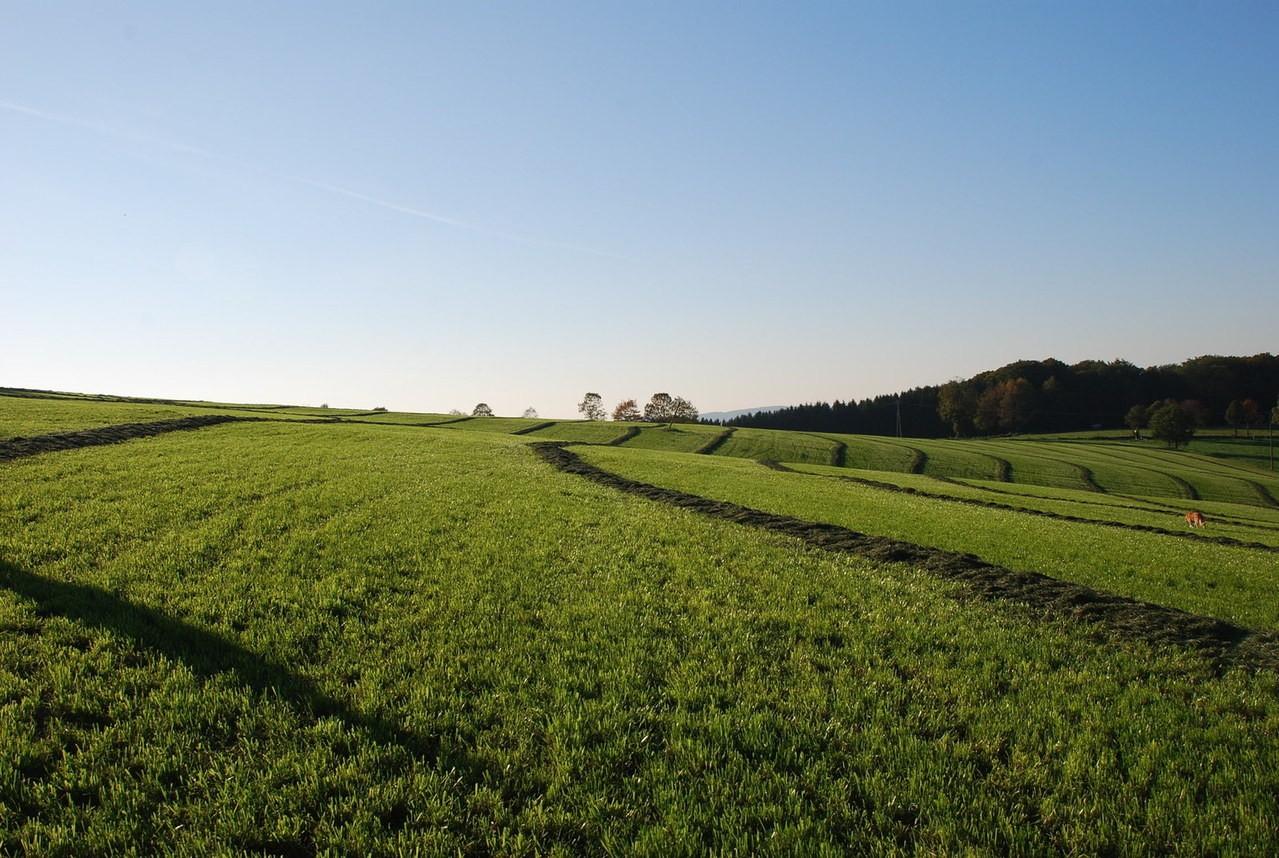 Środki chwastobójcze stosowane w rolnictwie