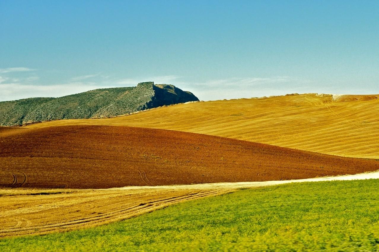Środki na chwasty w rolnictwie
